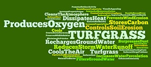 Turfgrass: It does a lot