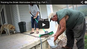 New Stink Bug Video Released