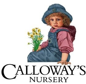 Calloway S Nursery Ranks No 20 In List Of The Top 100 Fast