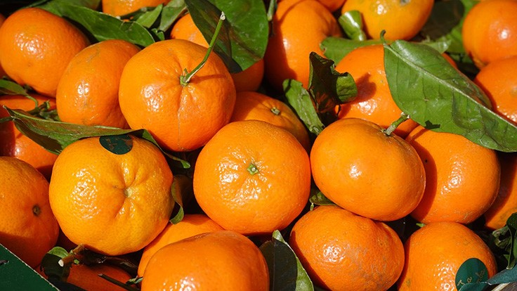 Moroccan Citrus Banned from U.S. Import