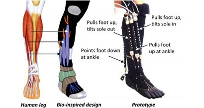 Soft wearable robot enables natural motions