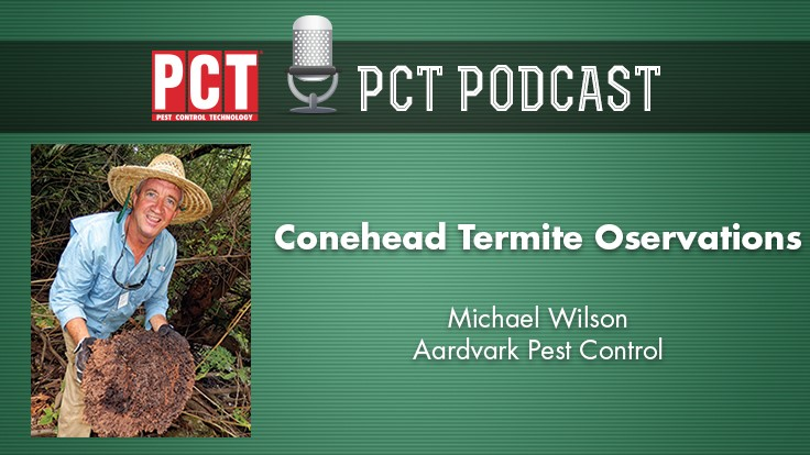 Podcast: Conehead Termite Observations