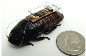 Video: Cyborg Roaches as Emergency Responders