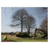 Davey moves two huge trees in Akron