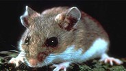 EPA Approves Rodenticide Label Amendment for Non-Commensal Species
