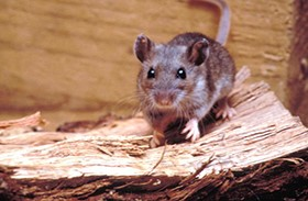 California Man Dies from Hantavirus