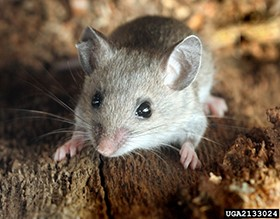 Second Hantavirus Death Stems from Yosemite National Park Visit
