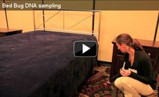 Video: Bed Bug DNA Sampling