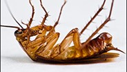 Cockroach Allergens May Increase Glaucoma Risk, Researchers Report