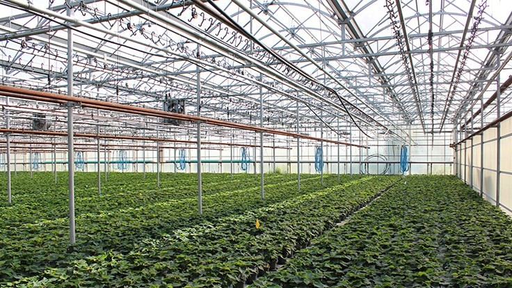 Ontario greenhouse growers are pushing back against carbon tax