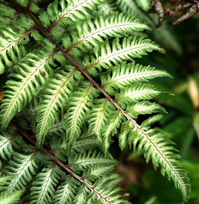 DNA mapping reveals non-native ferns in plant trade