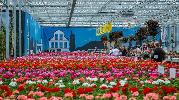 FlowerTrials attracts 13 percent more visitors