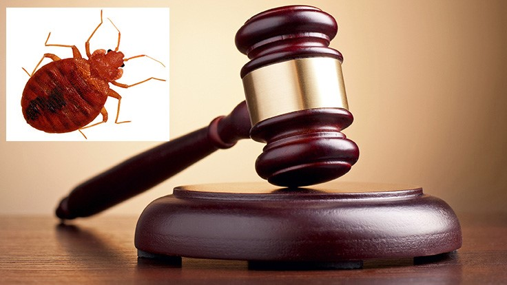Apartment Complex Loses $3.5 Million Bed Bug Lawsuit, LA Times Reports