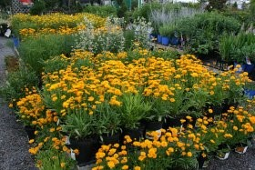 Garden Media Group releases 2012 Garden Trends Report