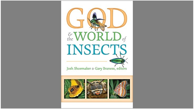 New book explores the purpose of insects in the world