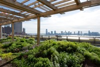 Green roof industry grew by 28.5 percent in 2010