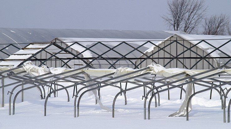 Cool Prepare Your Greenhouse For Winter Greenhouse Management Home Interior And Landscaping Mentranervesignezvosmurscom