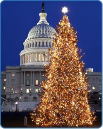 GSI Horticultural product to protect Capitol Christmas tree