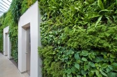 Largest green wall in North America is unveiled