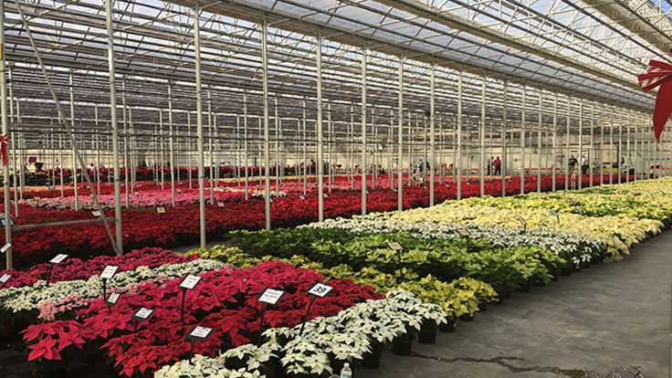 N.G. Heimos releases poinsettia trial results