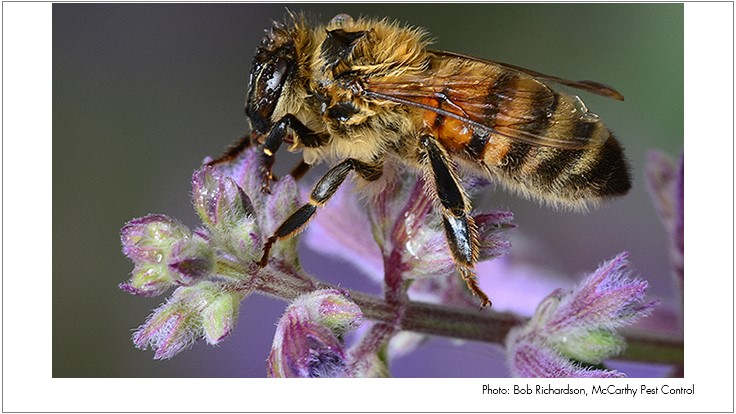 Human Behavior Hurting Bees, Researchers Say