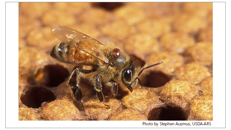 EPA Finalizes Bee Protection Plan