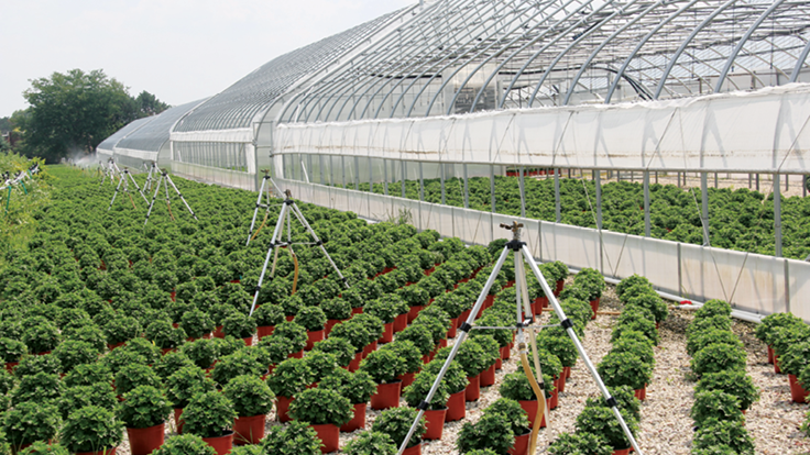 The importance of having and understanding greenhouse insurance policies