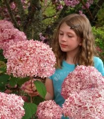 Hydrangea aids breast cancer research
