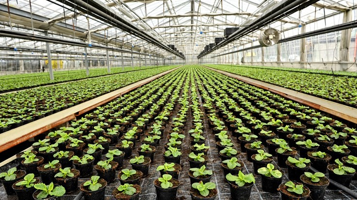 The main types of insurance for garden centers with greenhouse operations