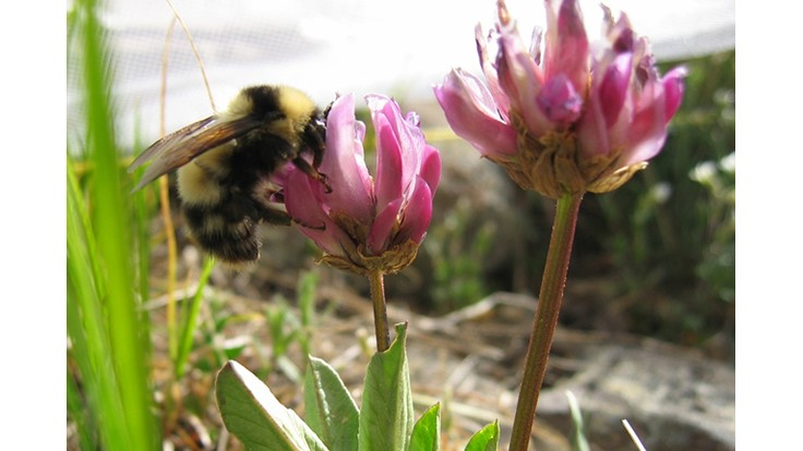 Scientists use bee buzzes to track bee flight activity