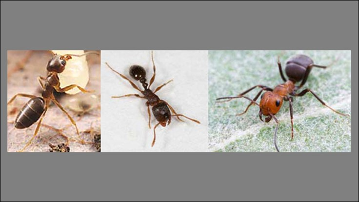 McCloud's Provides Prevention Tips for Control of Ants in Food Plants