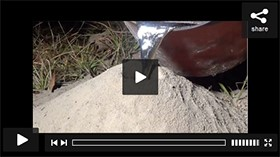 YouTube: Casting a Fire Ant Colony with Molten Aluminum