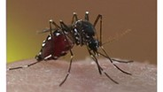 Atlanta Tops Orkin's List of Top Mosquito Cities