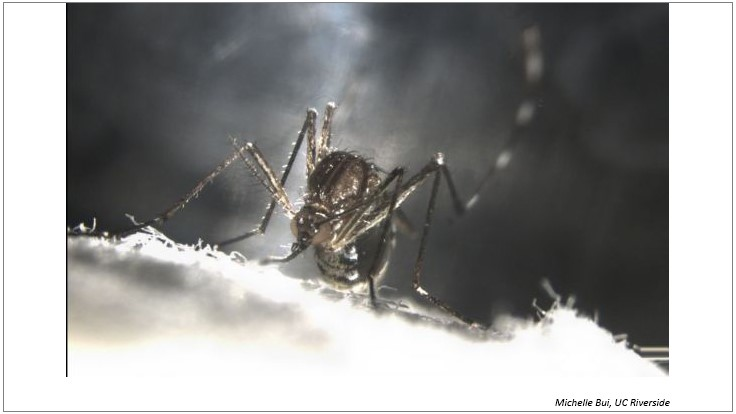 Making Mosquitoes Self-Destruct