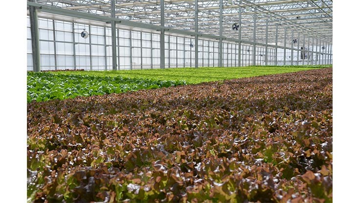 Michigan State and Iowa State researchers call on hydroponic food crop growers for survey