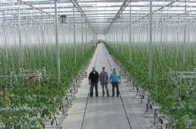 Canadian company completes 32-acre greenhouse expansion
