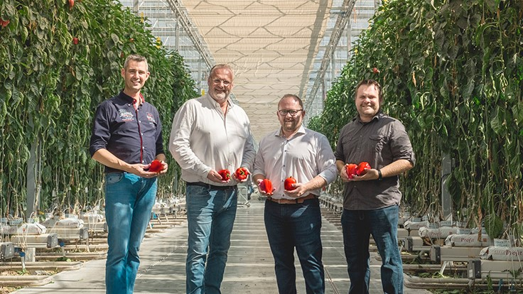 NatureFresh Farms takes home five awards at Greenhouse Vegetable Awards