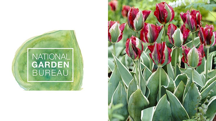 NGB declares 2018 the 'Year of the Tulip'