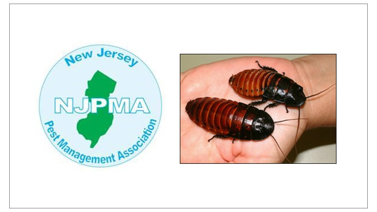 'Romney' Cockroach Beats 'Obama' Cockroach in NJ Derby