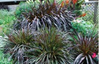 Green Guide: Pennisetum