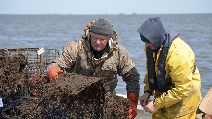The NOAA Marine Debris Program awards $1.2 million to 11 projects