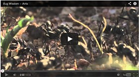 Video: Orkin's 'Bug Wisdom' Campaign