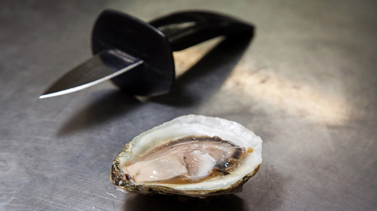 New Method of Oyster Opening Being Developed in South Australia