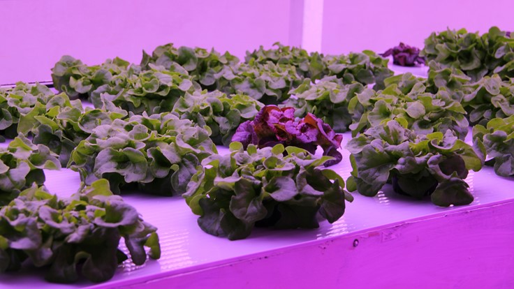 Civic Farms to grow leafy greens at Biosphere in Arizona