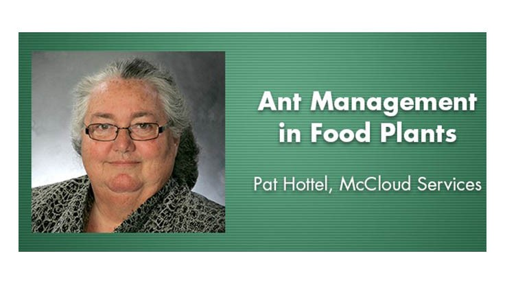 Podcast: Ant Control in Food Plants