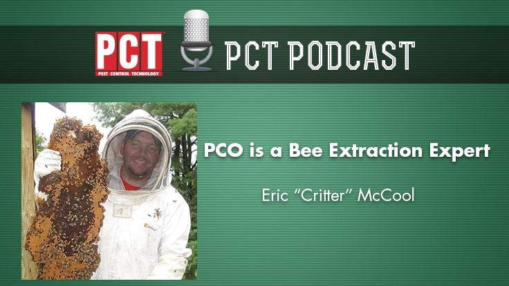 Podcast: A PCO and Bee Extraction Expert