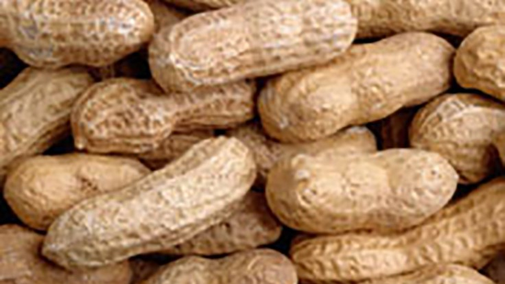FDA Acknowledges Qualified Health Claim for Early Peanut Introduction Link with Reduced Allergy Risk