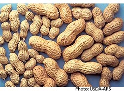 Study Examines Allergenic Properties of Proteins in Browned Peanuts