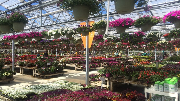Petitti Garden Centers closes one of its nine locations