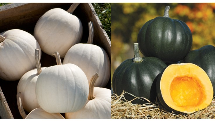 New cantaloupe, pumpkin and acorn squash seeds developed at UNH now available